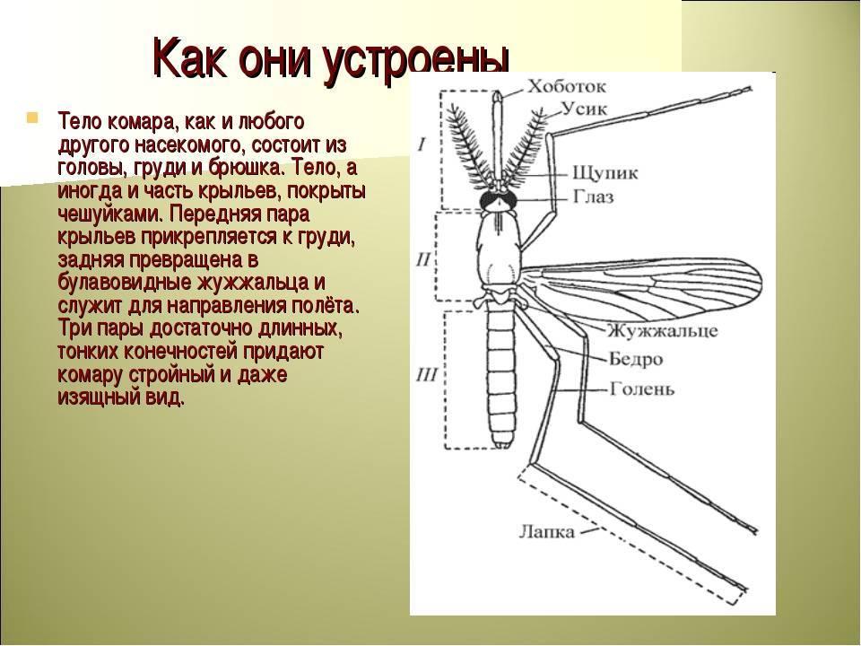 Что делает комар: как размножаются, чего боятся, интересные факты