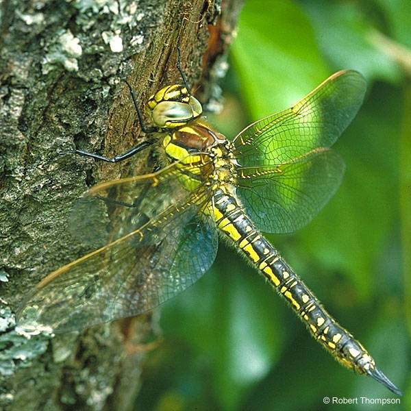 Описание, название и места обитания личинки стрекозы