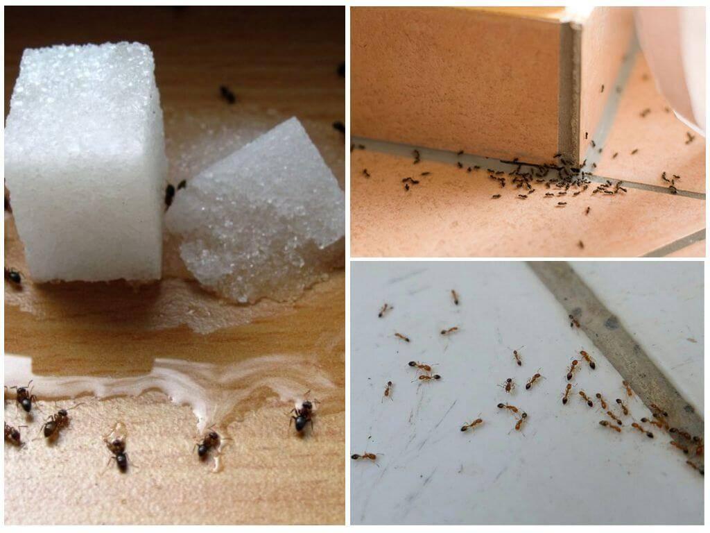 Как избавиться от муравьев в квартире раз и навсегда