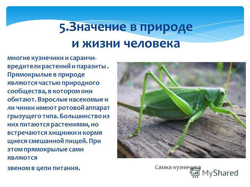 Стрекоза обыкновенная: фото и образ жизни