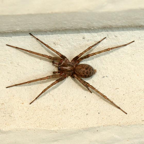 Откуда и почему в квартире или доме много пауков