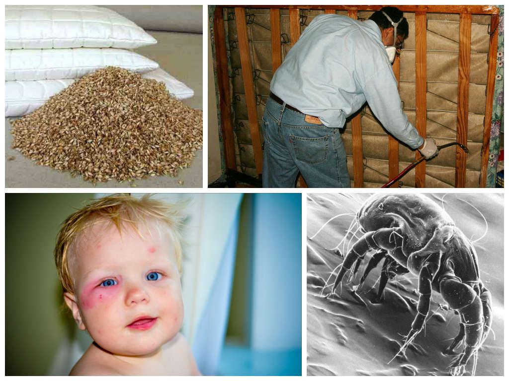 Клещи в подушках - признаки наличия, как избавиться