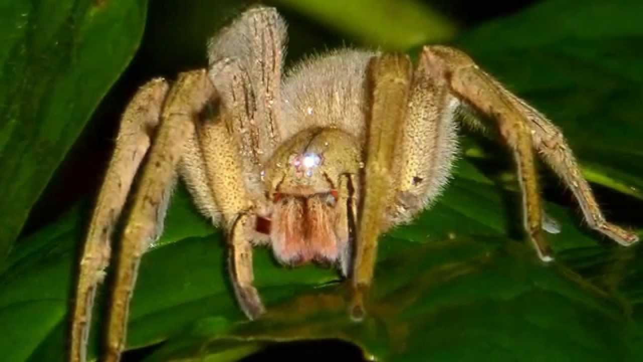 Самые большие пауки в мире - лучшие топ 10