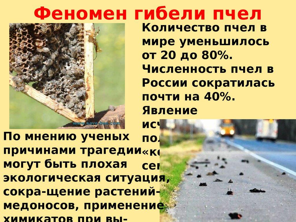 Почему умирают пчёлы? сообщения о гибели насекомых приходят из разных стран