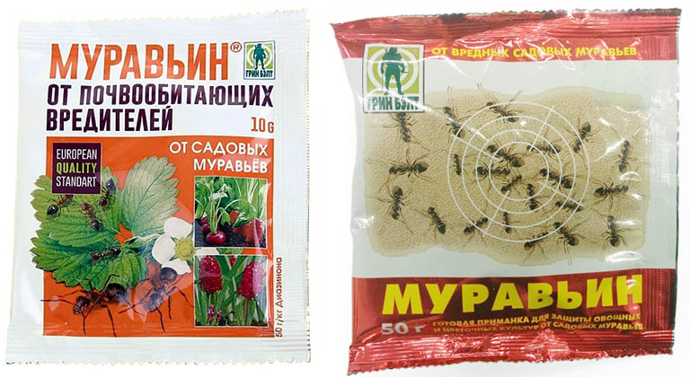 Черный муравей — натуральный препарат для улучшения потенции
