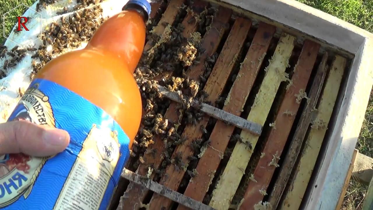 Обработка пчел от клеща осенью: методы лечения и препараты, определение варроатоза