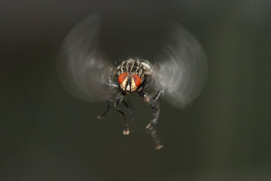 Скорость мухи, как летает муха