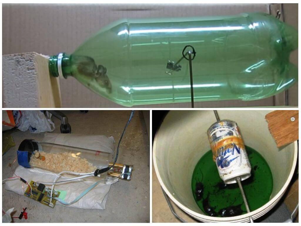 Мышеловка своими руками: из пластиковой бутылки, из ведра