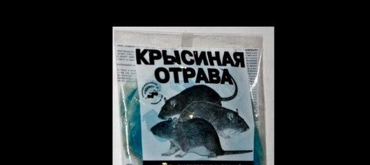 Бродифакум — современный крысиный яд