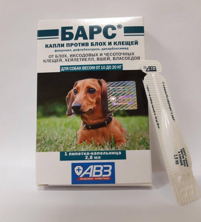 Как выбрать безопасные и эффективные таблетки от блох и клещей для собак