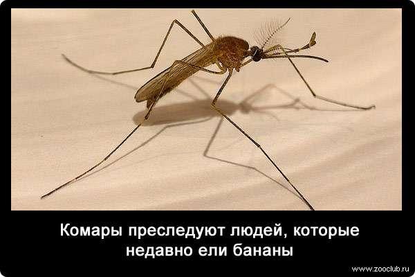 Интересные факты о комарах, виды, образ жизни, питание, размножение – удивительные факты