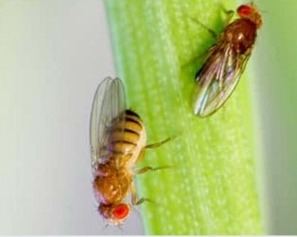 Как избавиться от мошек на кухне: причины появления, виды насекомых, средства