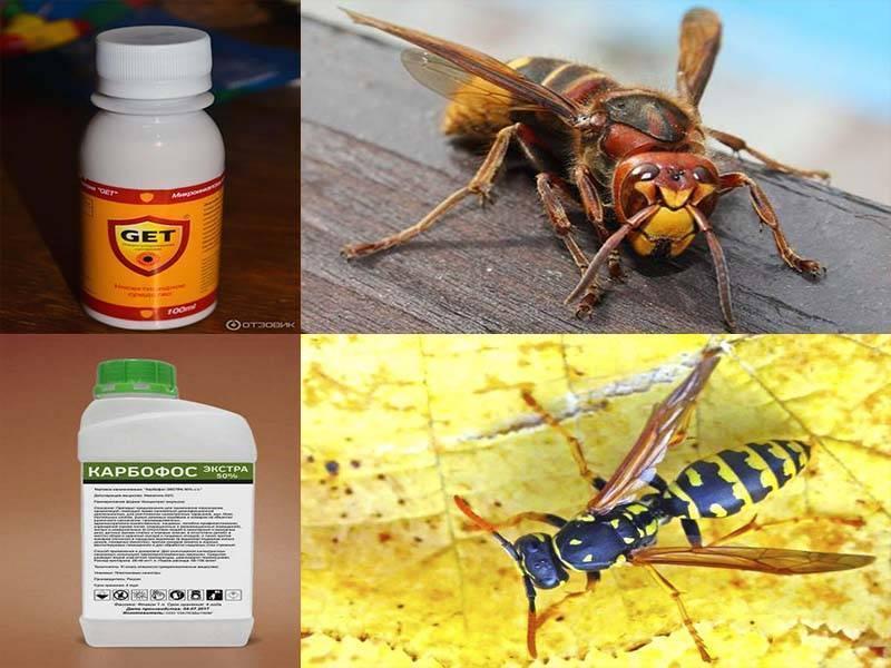 Чего боятся осы и как от них избавиться на природе