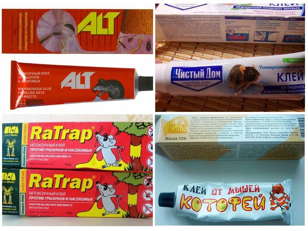 Клей для мышей - обзор, отзывы и правильное использование