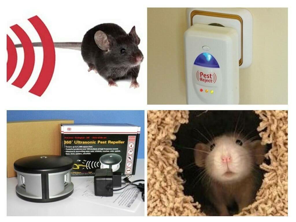 Какой запах отпугивает мышей
