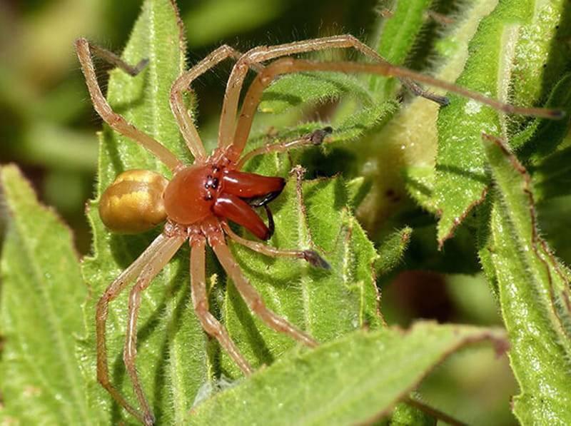 Укусил паук сак