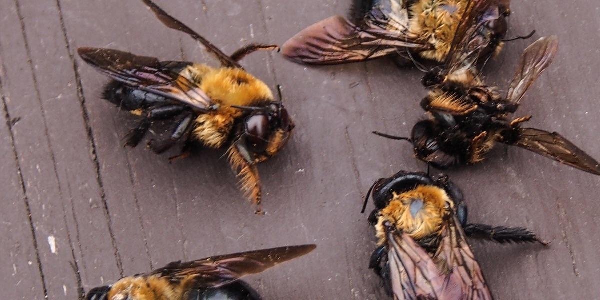 Почему гибнут пчёлы: основные причины и факторы, чем грозит вымирание, после укуса человека, советы пчеловодов