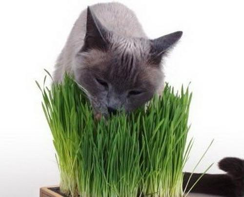 Чего боятся крысы: какие запахи не любят мыши, использование трав и отпугивателя, мышеловка своими руками,