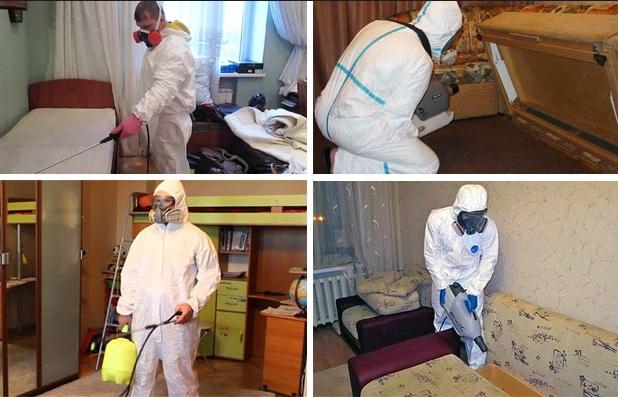 Санитарная обработка квартиры от тараканов - подготовка, требования и средства