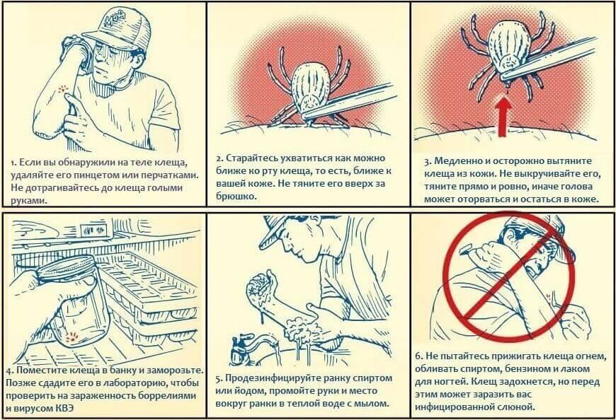 Что делать, если укусил клещ человека – первая помощь пострадавшему, профилактика клещевого энцефалита в домашних условиях