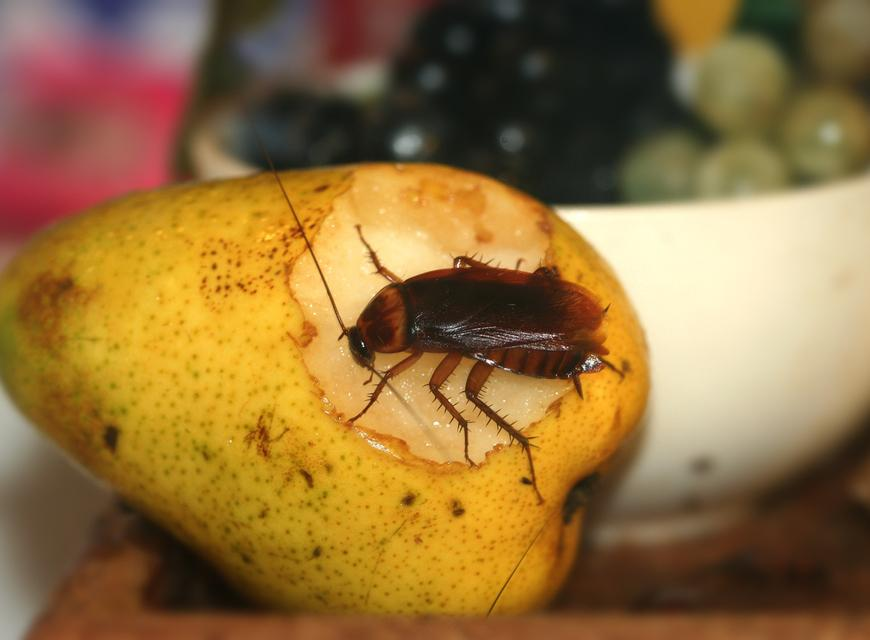 Как избавиться от больших черных тараканов в квартире?