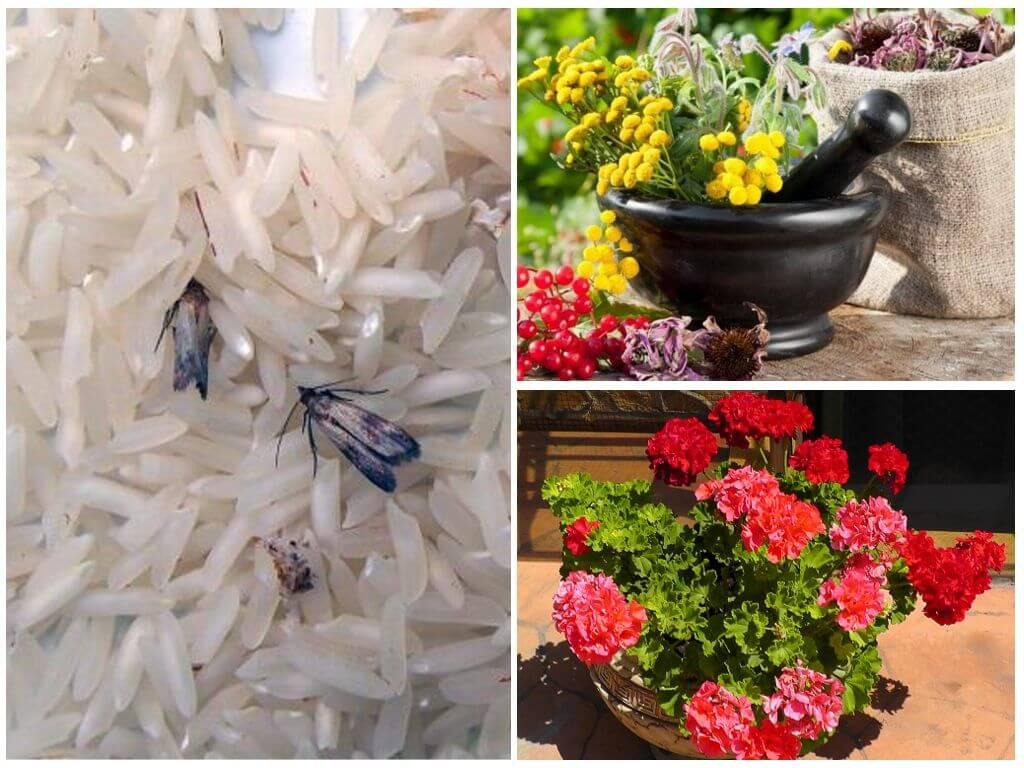Народные средства от моли в квартире: какие растения и цветы отпугивают вредителя, помогают ли эфирные масла и лаванда, способы применения русский фермер
