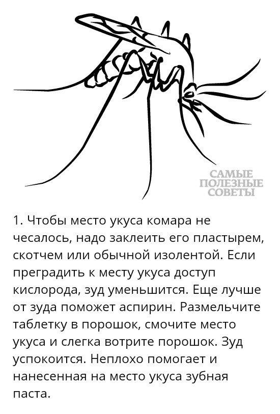 К чему снится очень много комаров. что означает образ комара во сне – толкования по сонникам и согласно народным поверьям