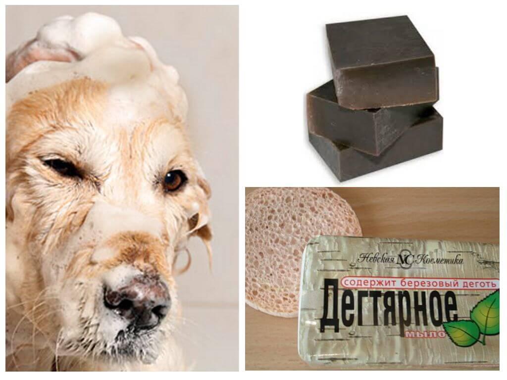Народные средства от блох у собак народные средства от блох у собак