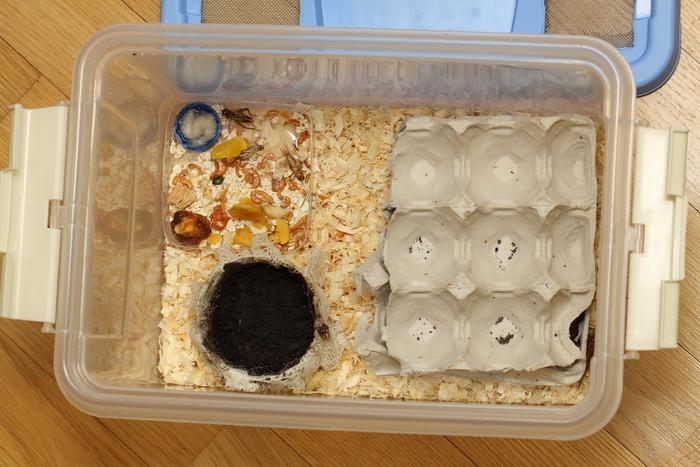 Разведение сверчков в домашних условиях: контейнер, климат, питание