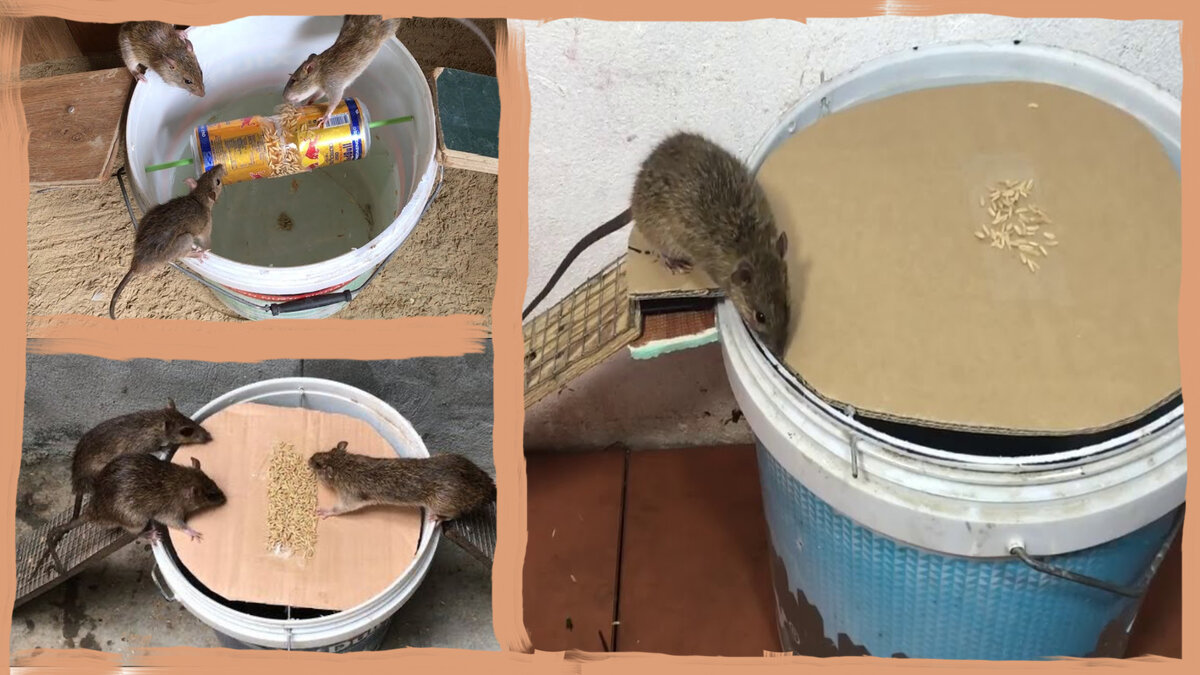 Средства от мышей в частном доме