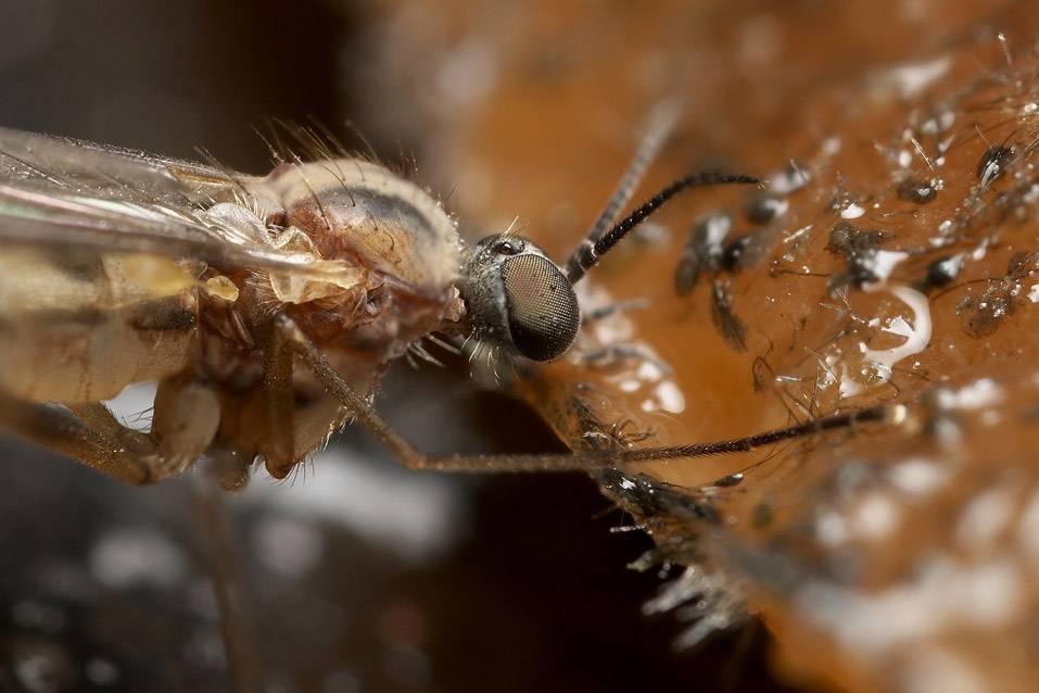 Есть ли зубы у комаров - доктор дент