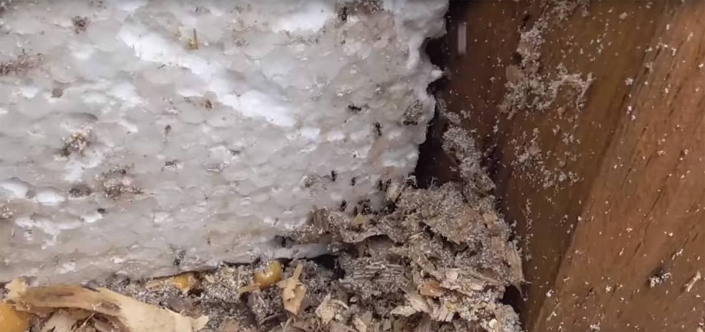 Едят ли мыши пеноплекс (пенопласт): чем его обработать для защиты