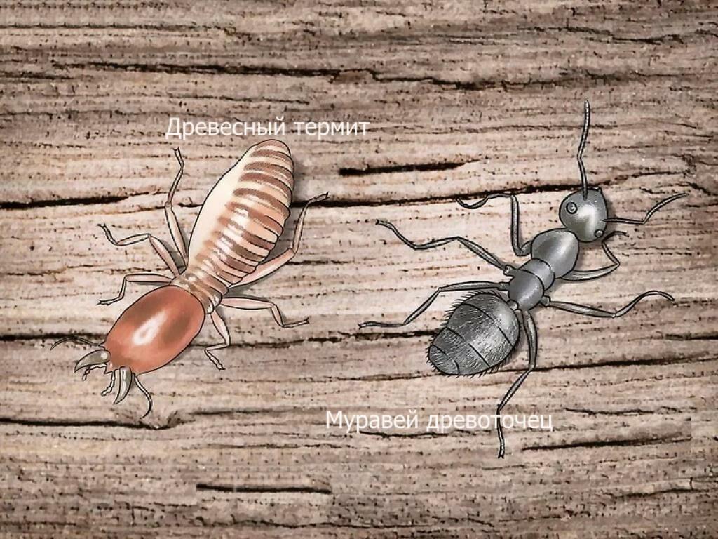 Большие муравьи в деревянном доме - как избавиться и какие средства использовать