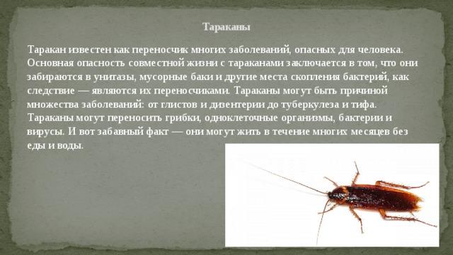 Как правильно содержать шипящего мадагаскарского таракана в домашних условиях и чем кормить?
