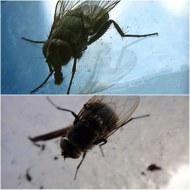 Откуда берутся мухи в квартире или доме