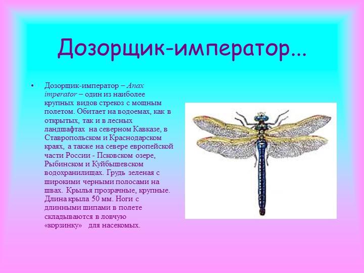 Дозорщик-император   мир чудес