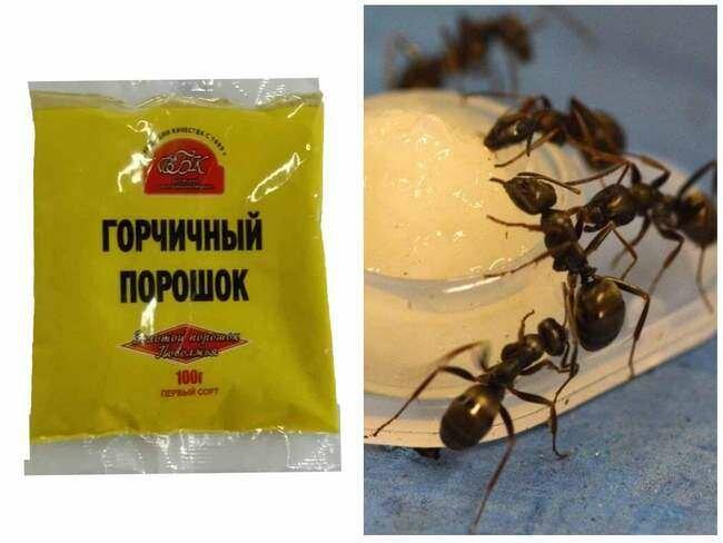 Как избавиться от муравьев на участке? в огороде, в саду, в теплице. народные средства — ботаничка.ru