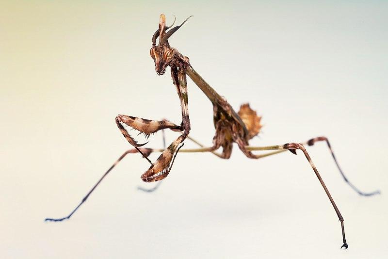 Богомолы в крыму: ядовитые или нет? кусаются ли они? фото и видео насекомых