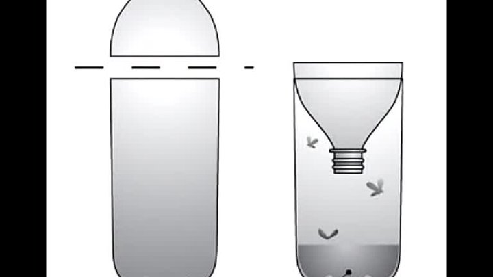 Ловушка для мух своими руками - лучшие рецепты и методы применения для различных типов помещений (105 фото)