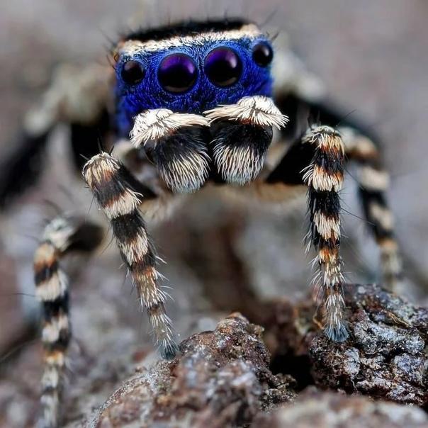 Каракурт паук. описание, особенности, виды, образ жизни и среда обитания каракурта | живность.ру