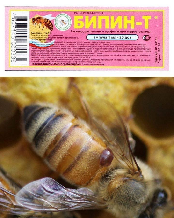 Бипин-т для пчел: способ применения, рекомендуемая доза, сроки обработки