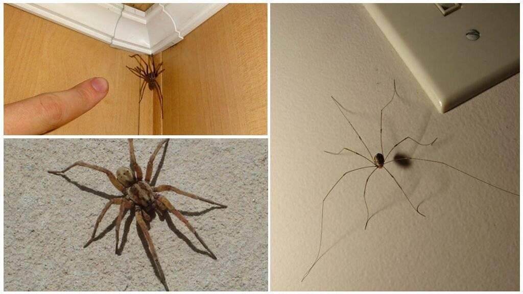 Эффективные средства от пауков в доме и квартире