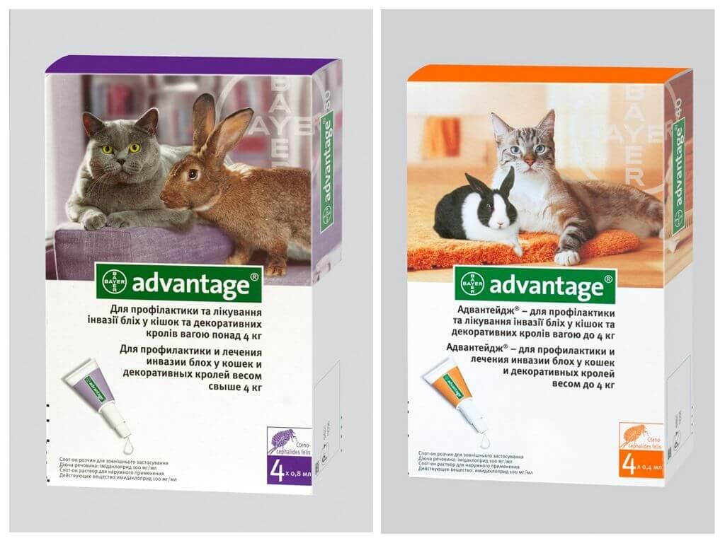 Блохи у кролика: лечение, народные средства, симптомы