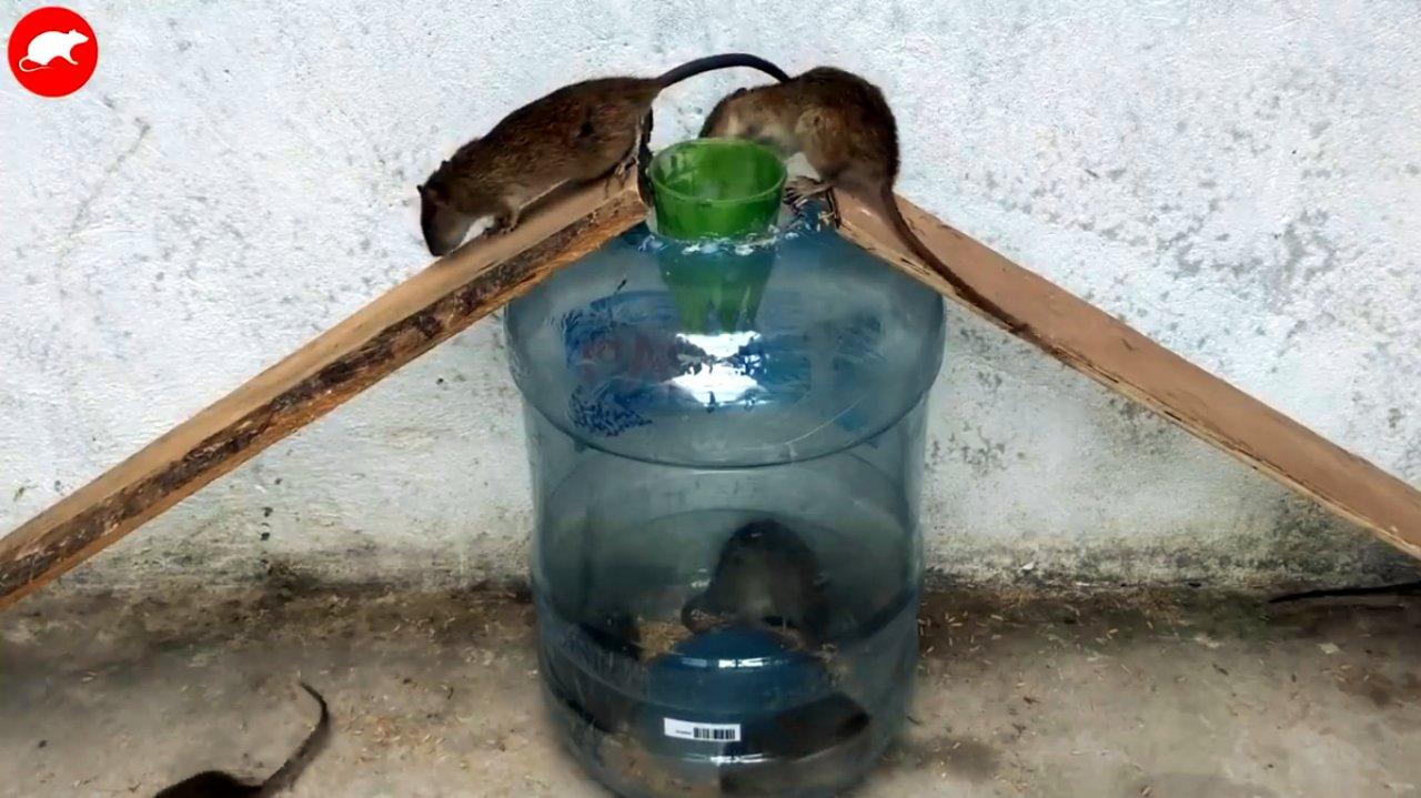 Как сделать ловушку для мышей своими руками?