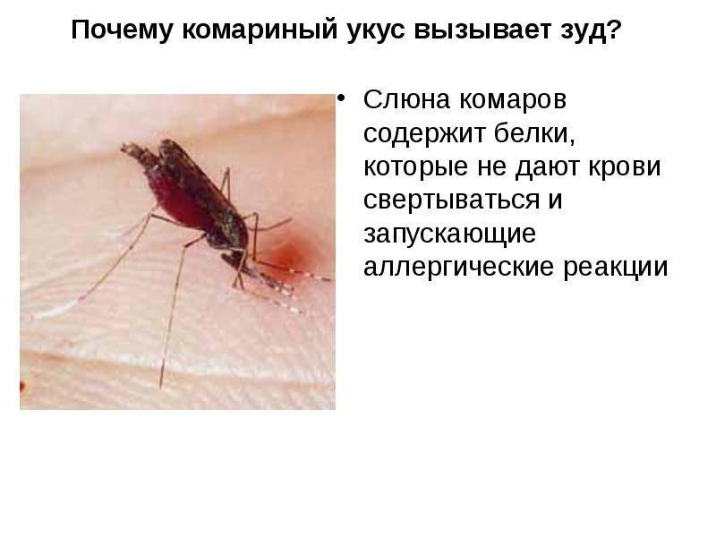 Укус малярийного комара: симптоматика и способы лечения