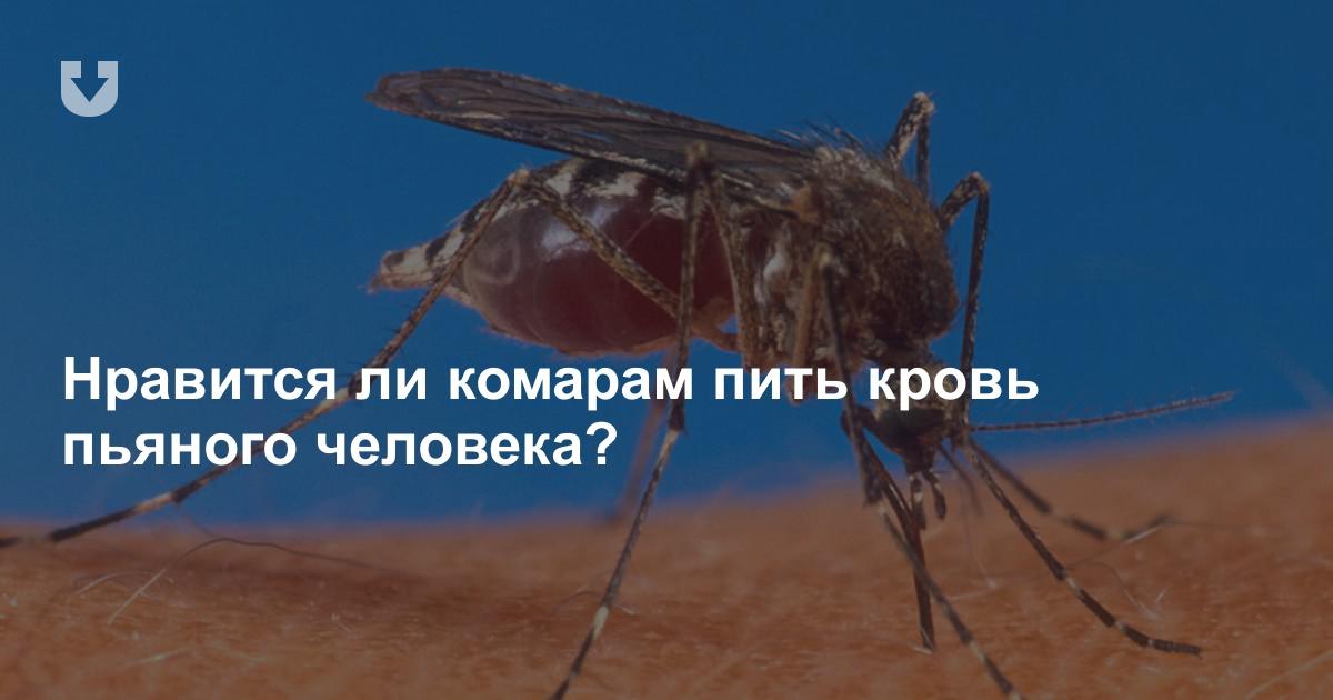 Почему комары кого-то кусают, а кого-то нет - с какой группой крови выбирают