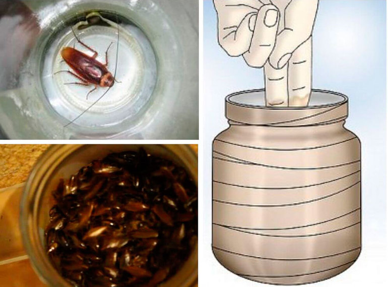 Самые эффективные ловушки для тараканов своими руками: как сделать приманку в домашних условиях самые эффективные ловушки для тараканов своими руками: как сделать приманку в домашних условиях