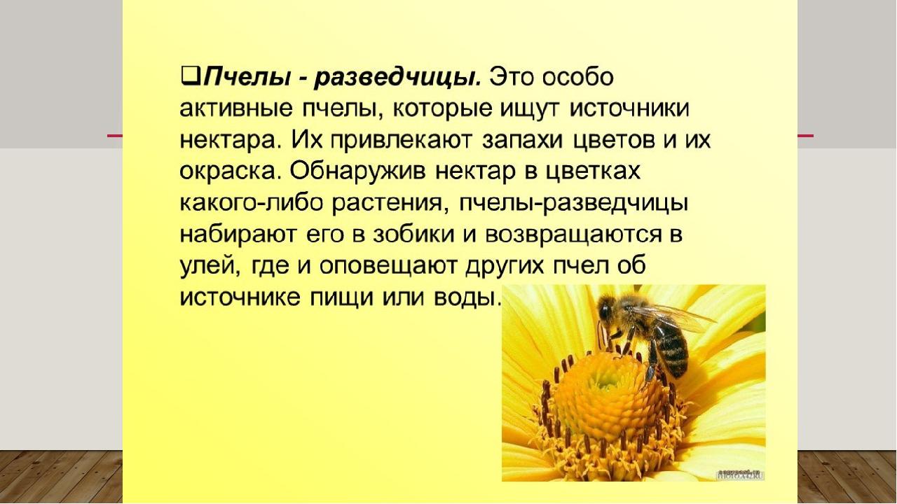 Факты о пчелах для детей | улей, пчела, апиология, мед