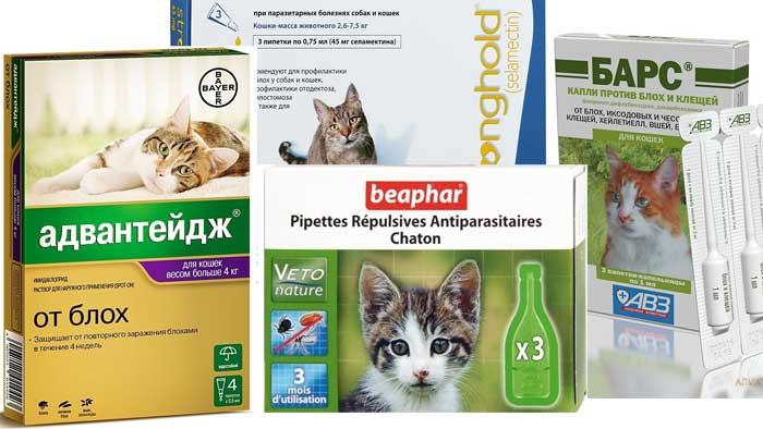 Как народными средствами вывести блох у кошки в домашних условиях