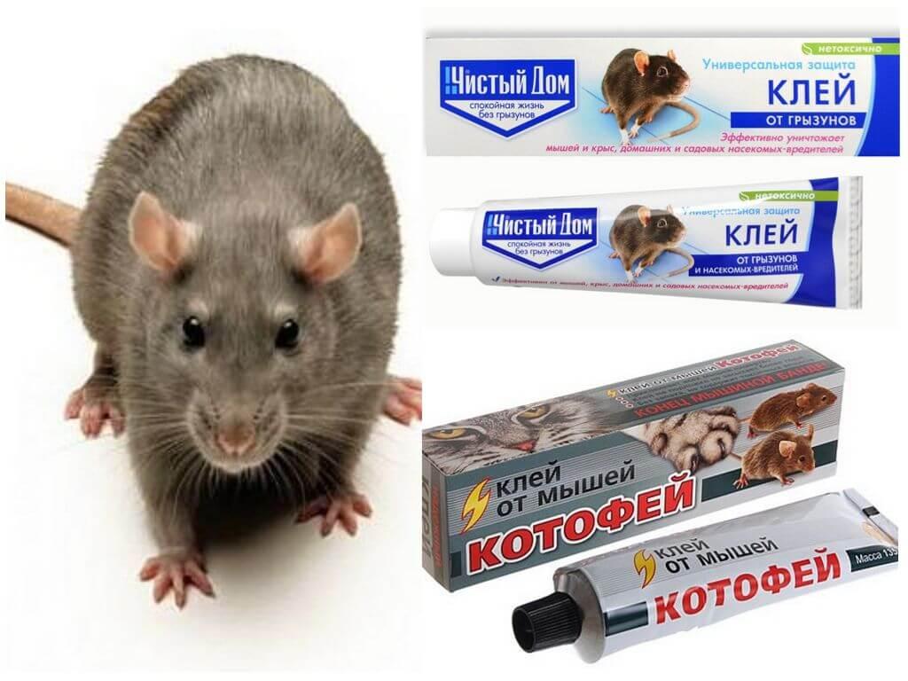 Средства от мышей в доме от которых они уходят навсегда - обзор и рекомендации